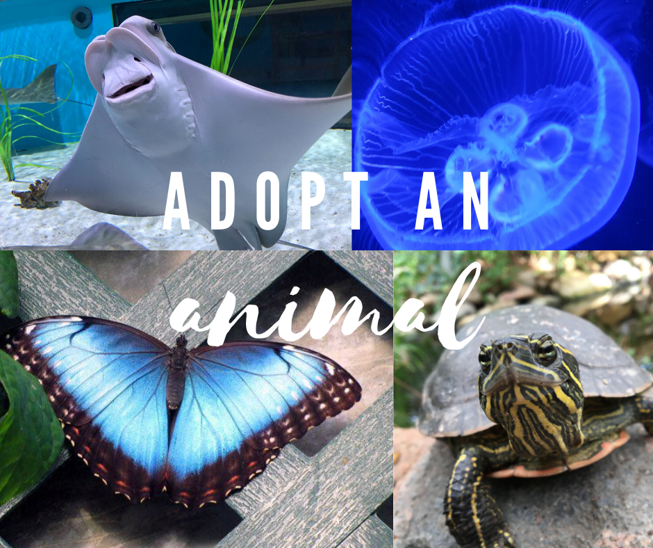Adopt An Animal Collage Graphic