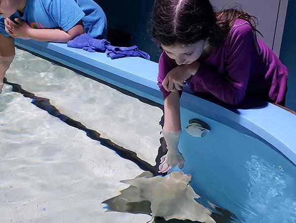 Animals Sting Ray Touch Pool Category Block Image