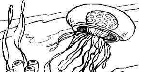 BHA19 Coloring Page Jellyfish