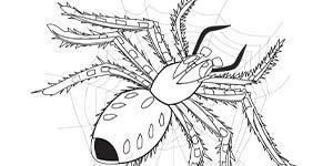 BHA19 Coloring Page Spider