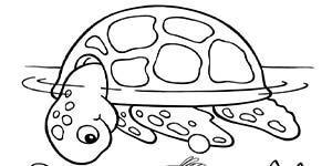 BHA19 Coloring Page Turtle