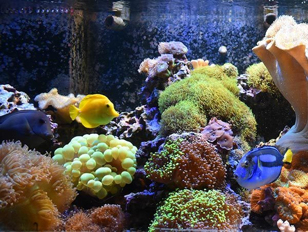Visit Animals Aquarium Category Block Image