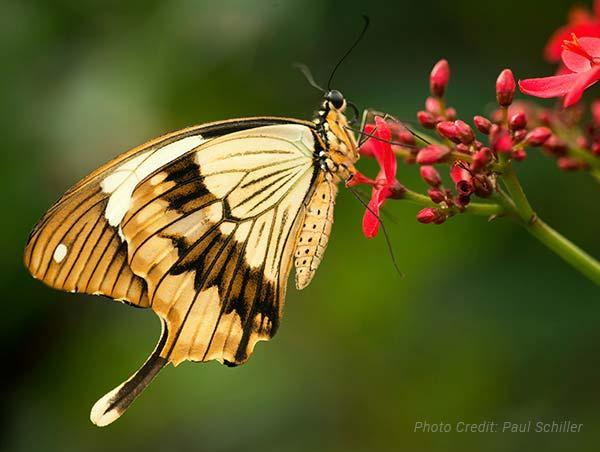 Visit Animals Butterfly House Category Block Image