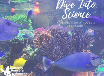 Dive Into Science Aquarium